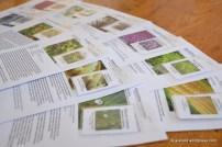Iirimaalt tellitud lille- ja köögiviljaseemned
