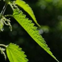 Taimedega taimekahjurite vastu