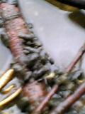 04-05-09_16-30.jpg