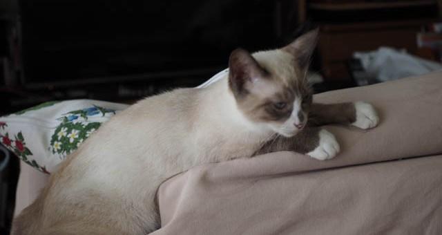 9年ぶりの子猫