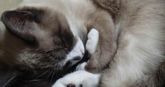 安らぎが伝わる寝顔