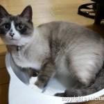 メル in 猫鍋