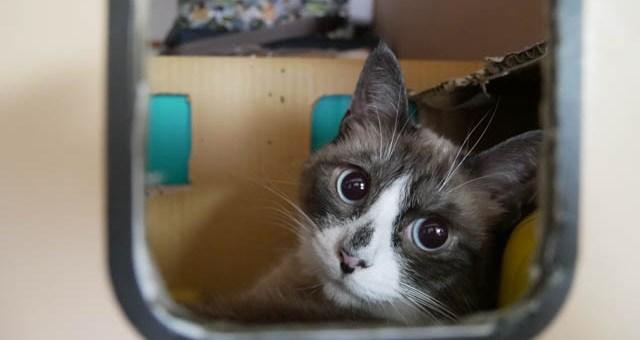 ヤマト猫、再び