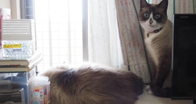 窓辺の二匹