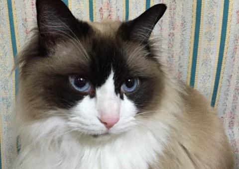 猫のふみふみ