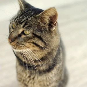 Sydney Cat Sitters