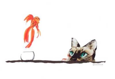 el gato vigila a pez