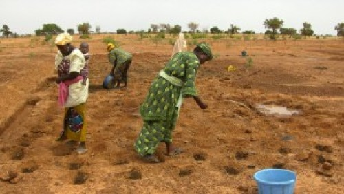 Women-sowing-okra-in-zai-ho