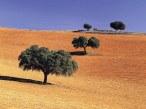 st-cnty001la_mancha_trees_-_spain