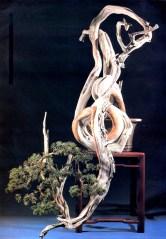 1B - Juniperus Chinesis altura 144cm - Base 1cm