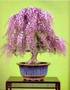 bonsai018