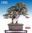 bonsai035