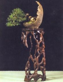 MELHOR SHOHIN Pinus uncinata - Patrice Bongrand (França)