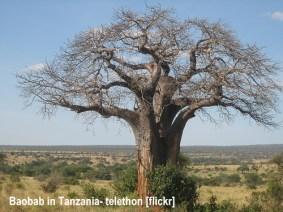 baobab-tanzania