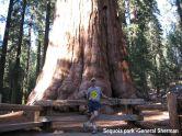 General Sherman Sequoia Park USA