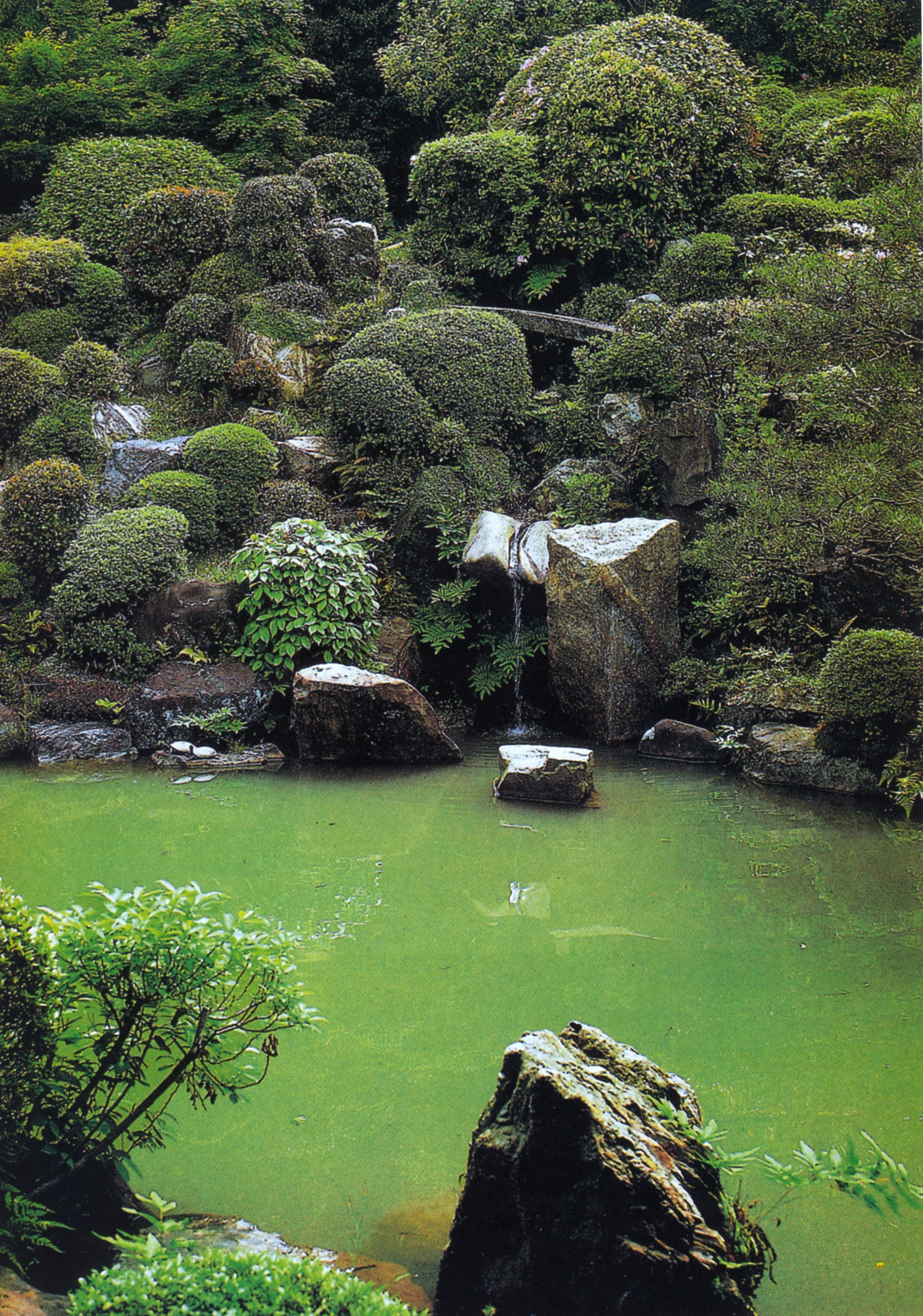 jap garden 189