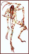 Nirasawa_Yasushi-Chameleon114-Alacura-D50