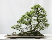 penjing-style-qingquan-zhao-02