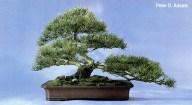 Han Kengai 2