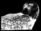 eagle1_fixed