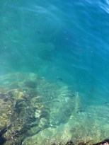 Just the beautiful, clear water of Cinque Terre...no big deal!