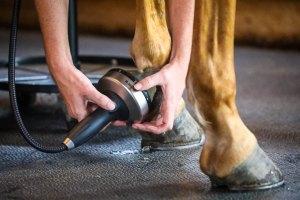 image of horse receiving shockwave