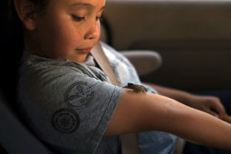 Cicadas Return to Onondaga Nation