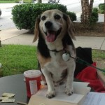 Charlie Beagle and the Dog Food Disaster