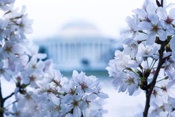 Cherry-Blossom-DC-Tidal-Basin-20160325-_DSC2668