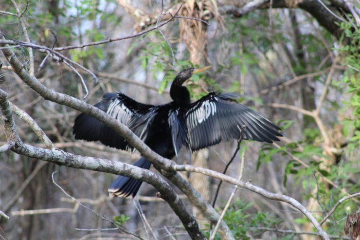 Everglades National Park, Miami, FL