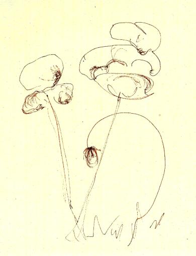 sketch#