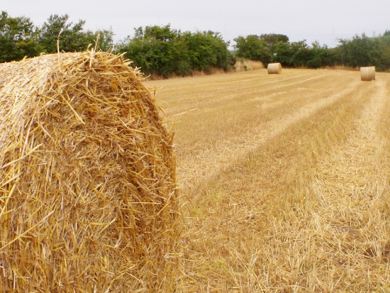 golden hay bales and grey skies Ailish Sinclair | Author