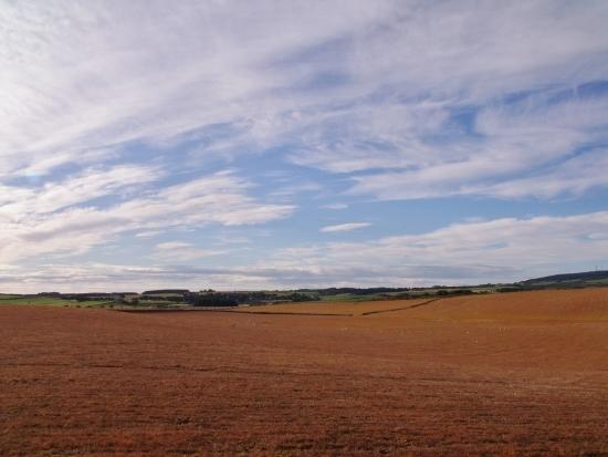 dead fields