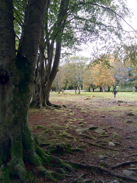Victorian Grove