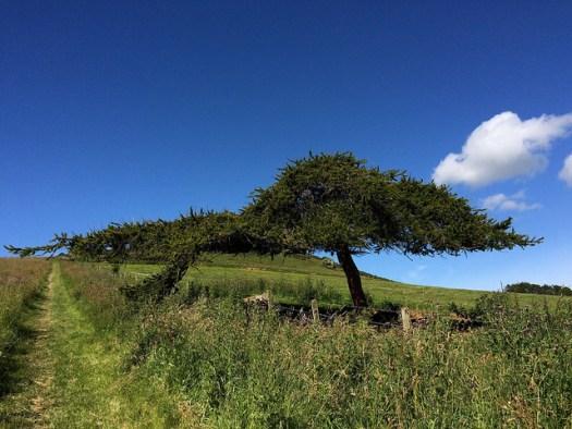 tree at Dunnydeer
