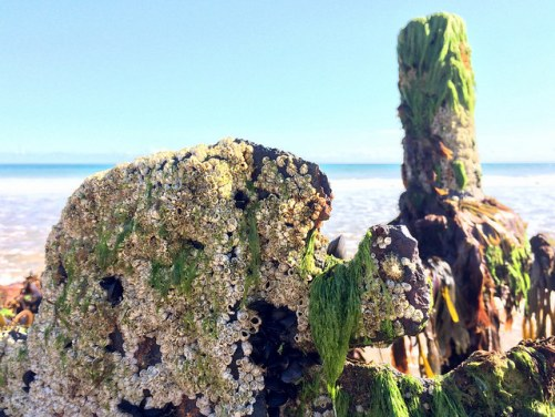 barnacles on a shipwreck - Ailish Sinclair, author