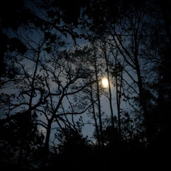 Moonlight through the trees. Ailish Sinclair | Writer