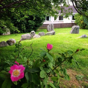 Roses bloom in Aviemore stone circle