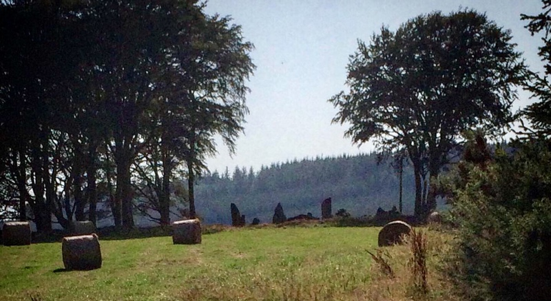 Tyrebagger Stone Circle in the distance, misty trees beyond