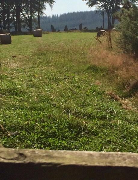 Tyrebagger Stone Circle across the field