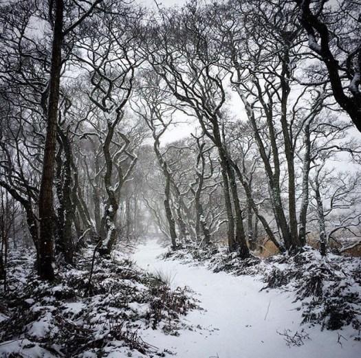 snowy woods in Scotland