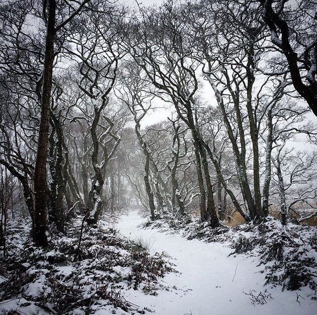 snowy woods in Scotland