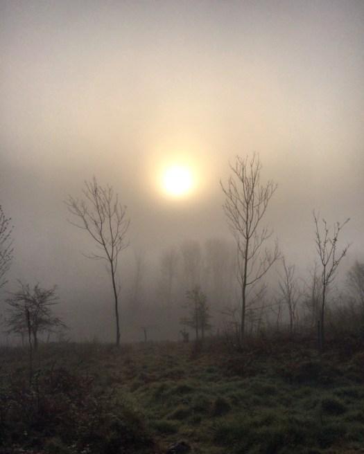 Misty woods during lockdown in Scotland.
