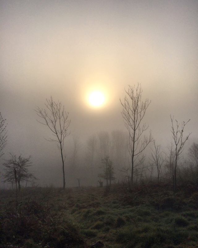 Misty woods during lockdown in Scotland.