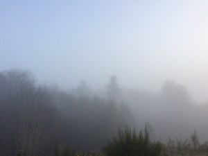 mists over trees