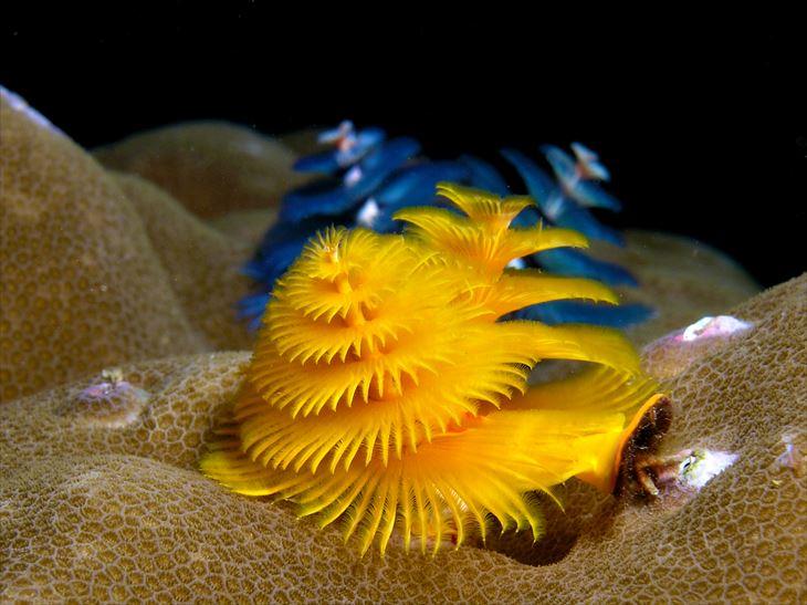 深海生物 27