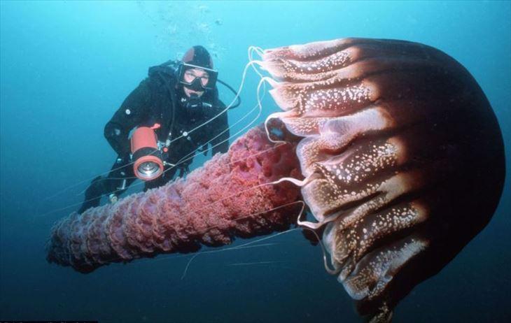 深海生物 28