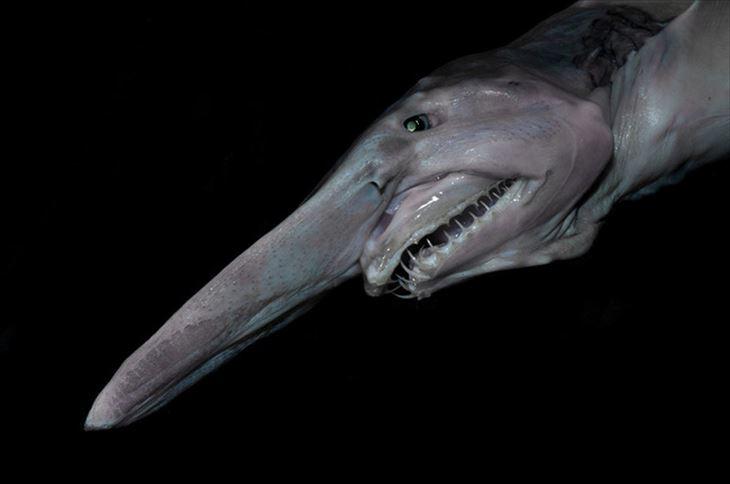 サメよりサメな深海生物