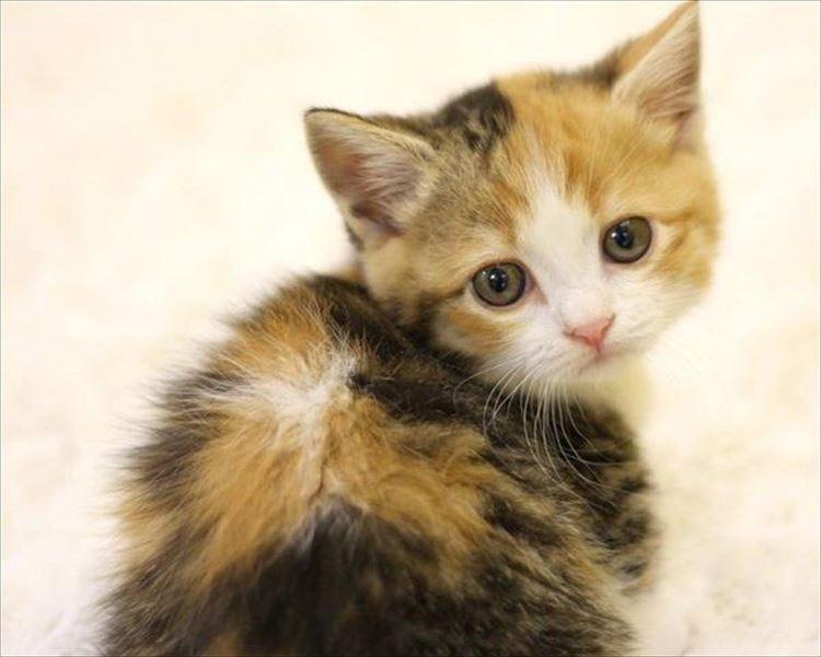 かわいい猫24