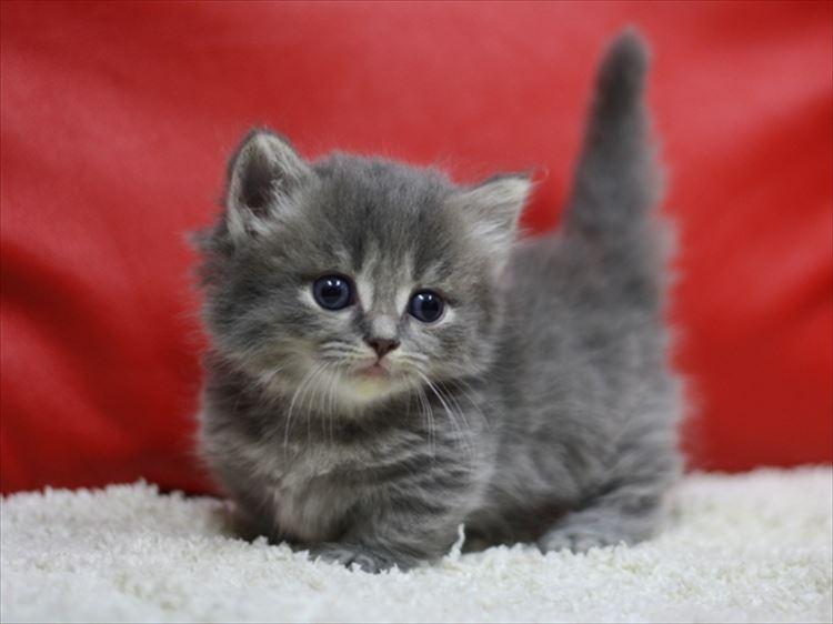 かわいい猫28